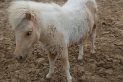 Pónii! Olyan cuki! / Pony! Aww sooo cute
